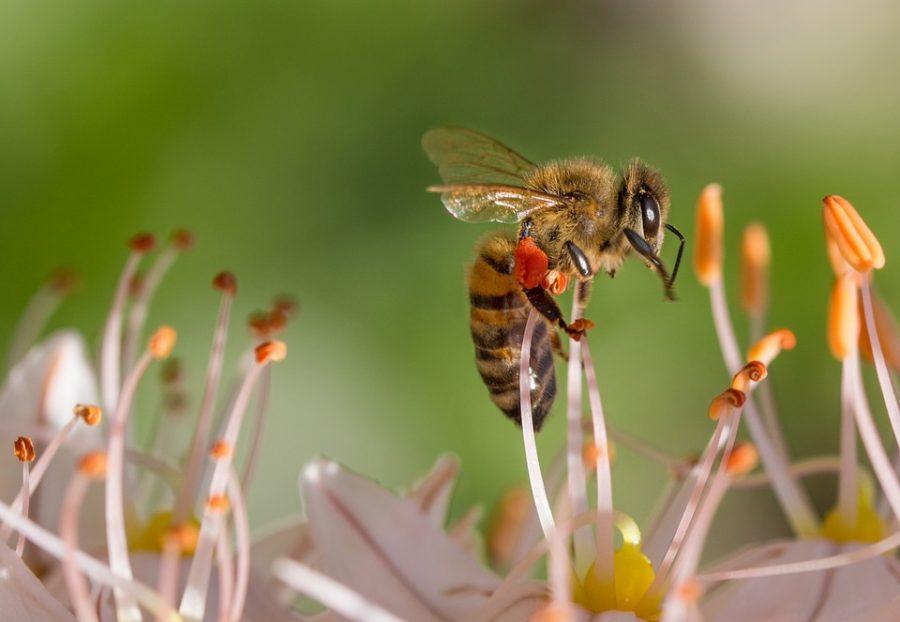 L'importanza delle api