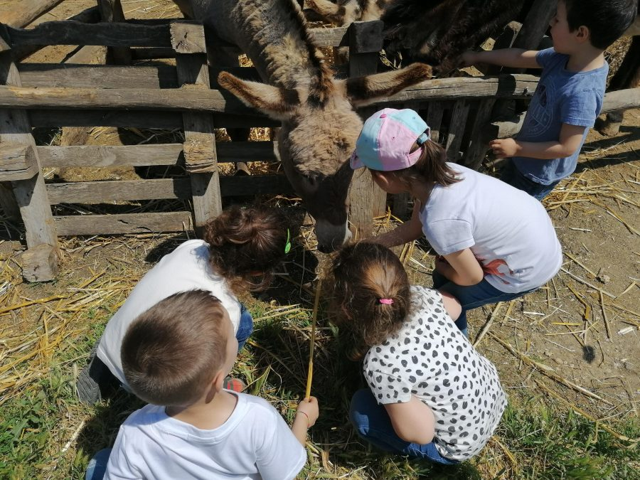 Scuola all'aperto: racconto di un'esperienza presso La Collina storta