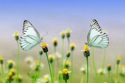 Contatto con la natura: benefici per corpo e mente